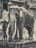 Eléphants du Siam puis de Thaïlande (1890 - 1970)