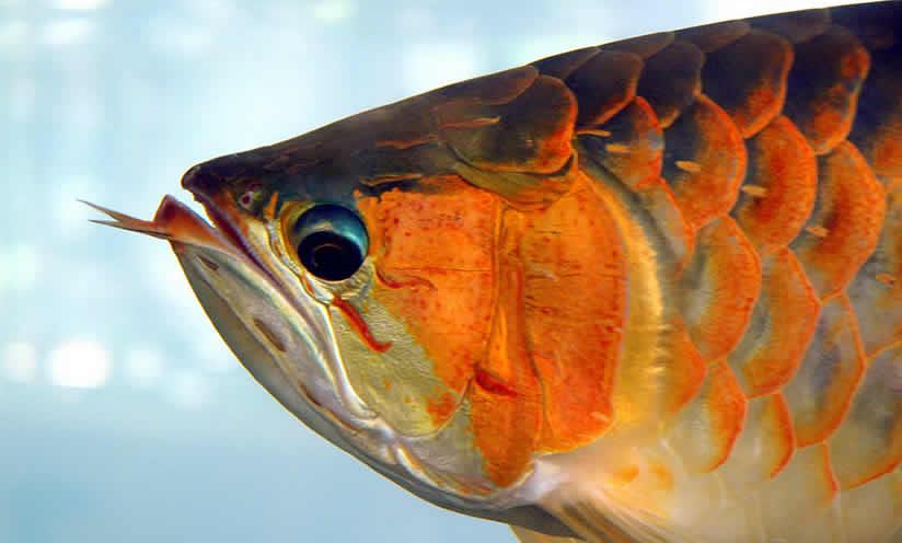 Marché aux poissons d'aquarium